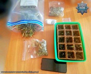 22-latek zatrzymany za posiadanie ponad 120 gramów marihuany