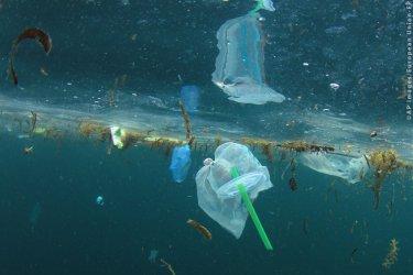 Posłowe PE za zakazem plastików jednorazowego użytku