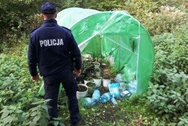 Policja bezlitosna dla plantatorów