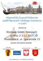 Rasowe gołębie po raz trzeci w Moszczenicy