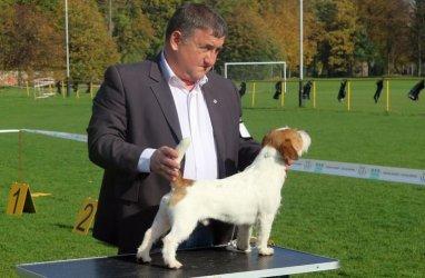 Wystawa psów myśliwskich w Piotrkowie