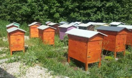 W Bieżywodach padło kilkaset tysięcy pszczół