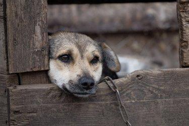 Gdzie w Piotrkowie zgłosić znęcanie się nad zwierzętami?