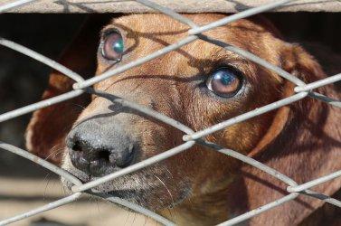 Bardziej surowe kary dla znęcających się nad zwierzętami