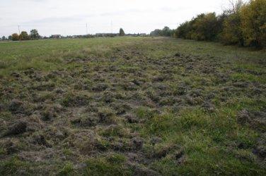Rolnicy chcą odszkodowań i odstrzału dzików