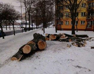 Wycinka drzew przy Kostromskiej