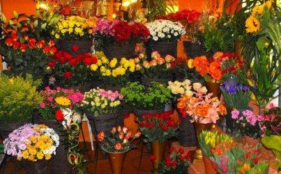 Ranking najlepszych kwiaciarni