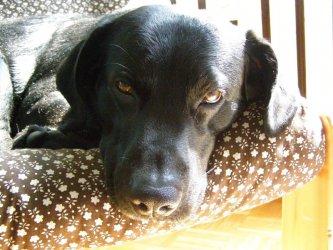 Adoptuj psa! - apelują włodarze gminy Wola Krzysztoporska
