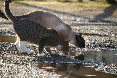 Kto usuwa poidełka dla zwierząt?