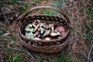 We wrześniu dobra pogoda dla grzybiarzy