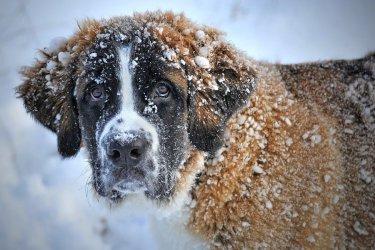 Jak pomóc przetrwać naszemu psu zimę?
