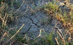 Kiedy rolnicy otrzymają odszkodowania za straty spowodowane przez suszę?
