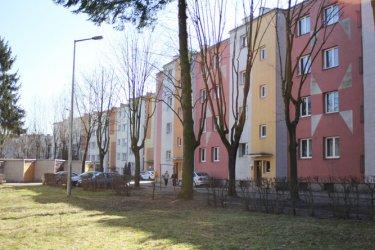 Drzewka owocowe kością niezgody na osiedlu Jagiellońska