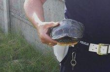 Interweniują nawet w sprawie żółwia