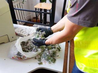 Miał w mieszkaniu kilogram marihuany