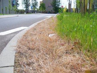 Trawniki potraktowane zbyt surowo