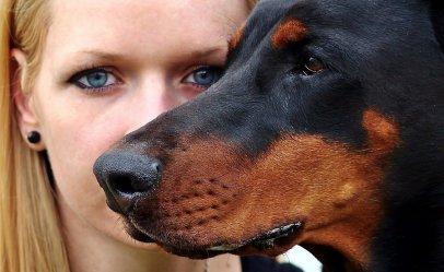 5 najlepszych psów obronnych - poznaj te groźne rasy