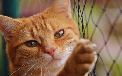 Miasto Kotów szuka nowej siedziby