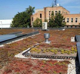 Roślinna mozaika na dachu mediateki