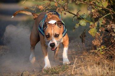 Dlaczego pies pogryzł dziecko w Sulejowie?