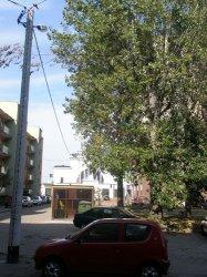 Na usunięcie niebezpiecznej gałęzi czekają miesiące