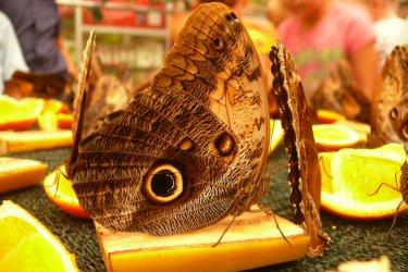 Egzotyczne motyle już zawitały do Piotrkowa
