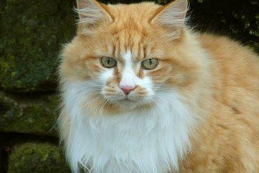 W piotrkowskim schronisku koty czekają na adopcje