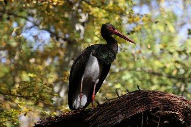 Leśnicy uratowali rannego ptaka