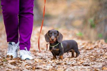 Wyższe kary dla właścicieli psów