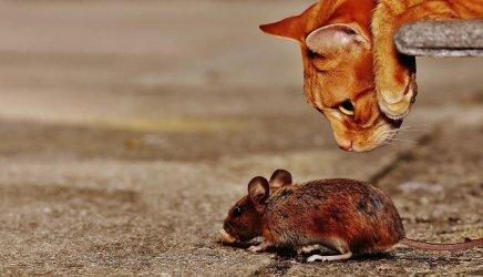 Myszy lub szczury w zakładzie produkcyjnym - obowiązki ustawowe i formy zwalczania