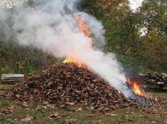 Nie pal liści na działce