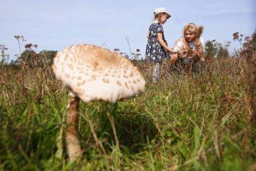 Ekspertka: zbiory grzybów w polskich lasach szacuje się średnio na ok. 100 tys. ton rocznie