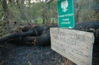 Region: Spłonął 900-letni Dąb Cygański