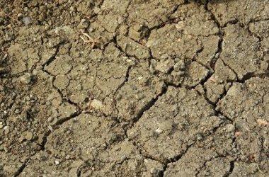 Pomoc suszowa – ARiMR sukcesywnie realizuje wypłaty