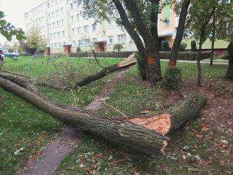 Kolejne protesty w związku z wycinką drzew w Piotrkowie Trybunalskim