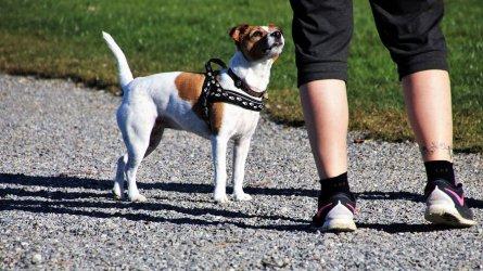 Trwa bezpłatna akcja czipowania psów