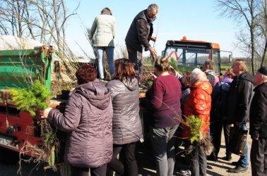 W gminie Grabica rozdawali sadzonki