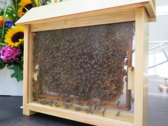 Potrzeba nam więcej pszczół i pszczelarzy. Dziś Dzień Pszczół