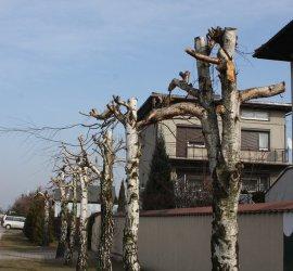 Ludzie, nie niszczcie drzew!