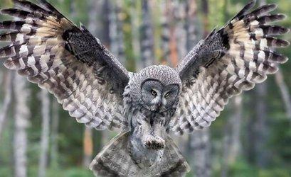 Dzikie ptactwo na Placu Pofranciszkańskim