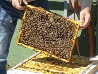 Światowy Dzień Pszczół. Jak pomóc tym ważnym owadom?