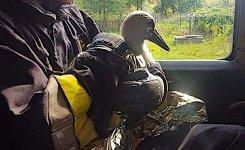 Strażacy uratowali młodego bociana