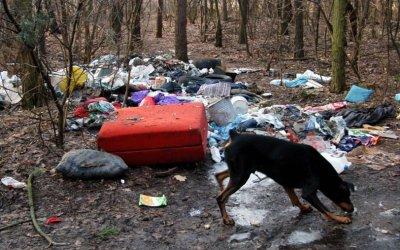 Prace nad surowszym karaniem śmiecących w lasach są bardzo zaawansowane