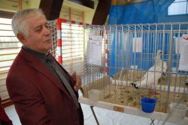 Zapraszamy na kolejną wystawę gołębi rasowych i drobnego inwentarza