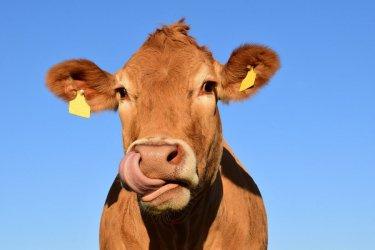 Rejestracja zwierząt znów możliwa