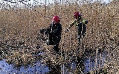 Akcja ratunkowa na mokradłach