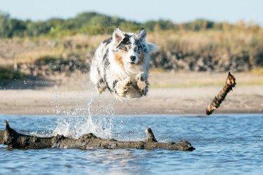 Kąpiel z psem - na co zwrócić uwagę?