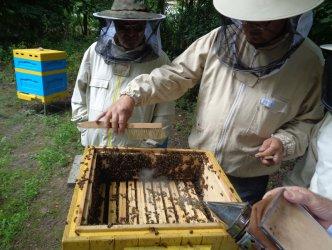 Pszczelarze z Sulejowa