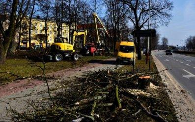Znikają drzewa z placu Niepodległości. Ruszyła modernizacja