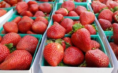 Ulubionymi owocami Polaków są truskawki, a warzywami - pomidory